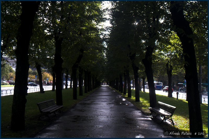 Aleja na ulice Brivibas (Wolności)